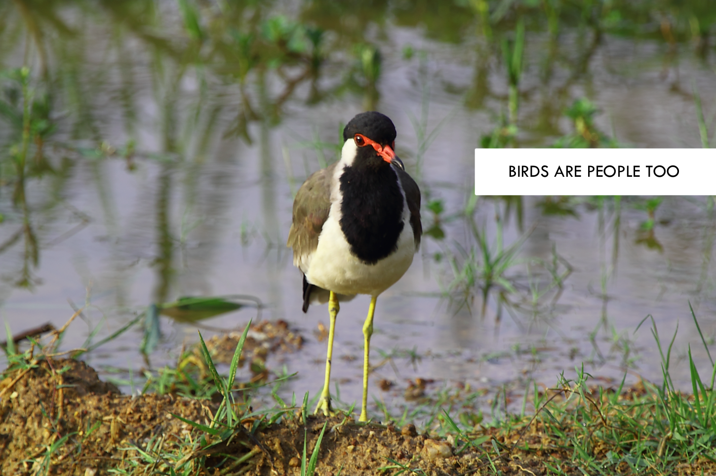 Photo Diaries: Birds Are People Too