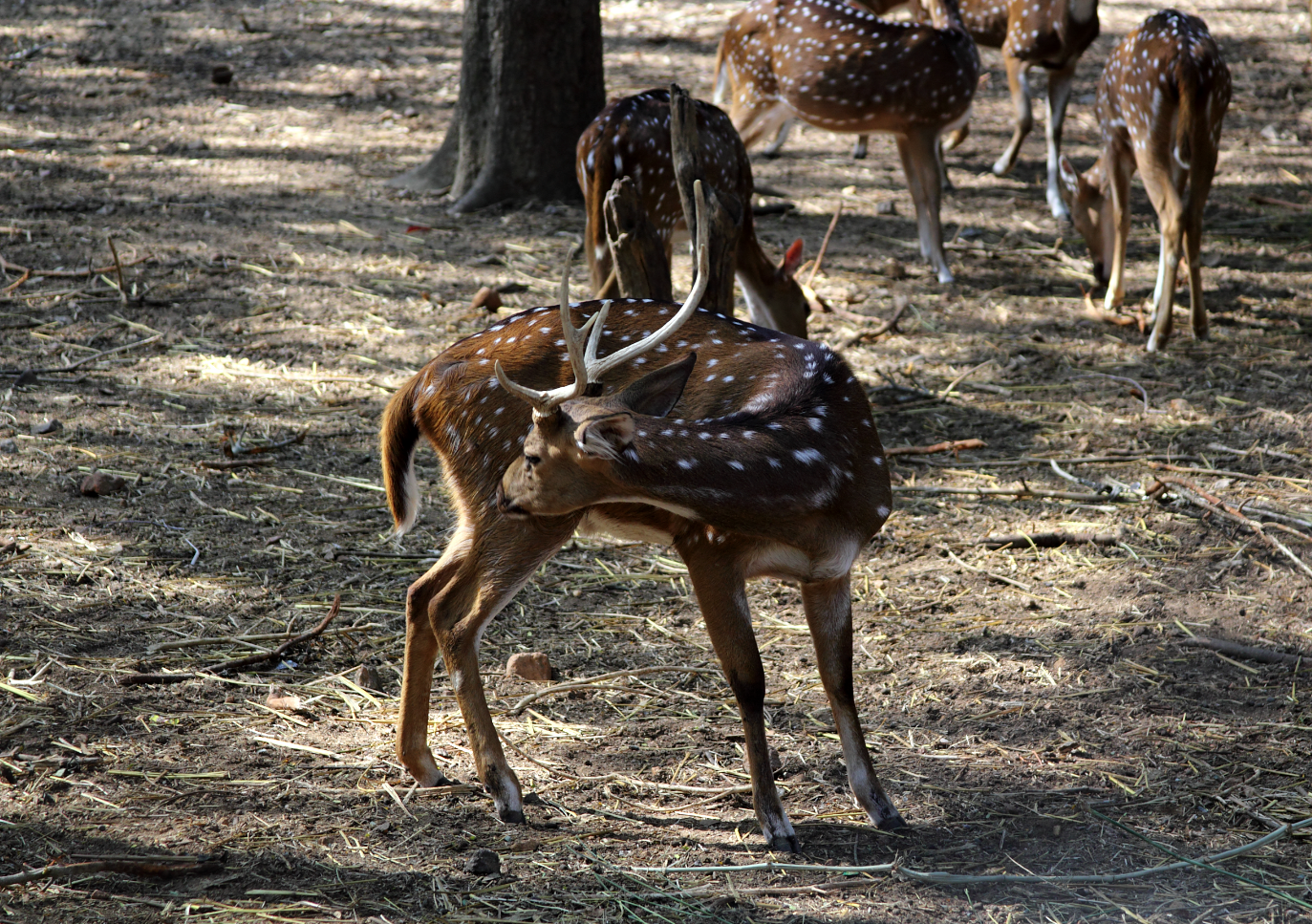 deer in the park -photo diaries