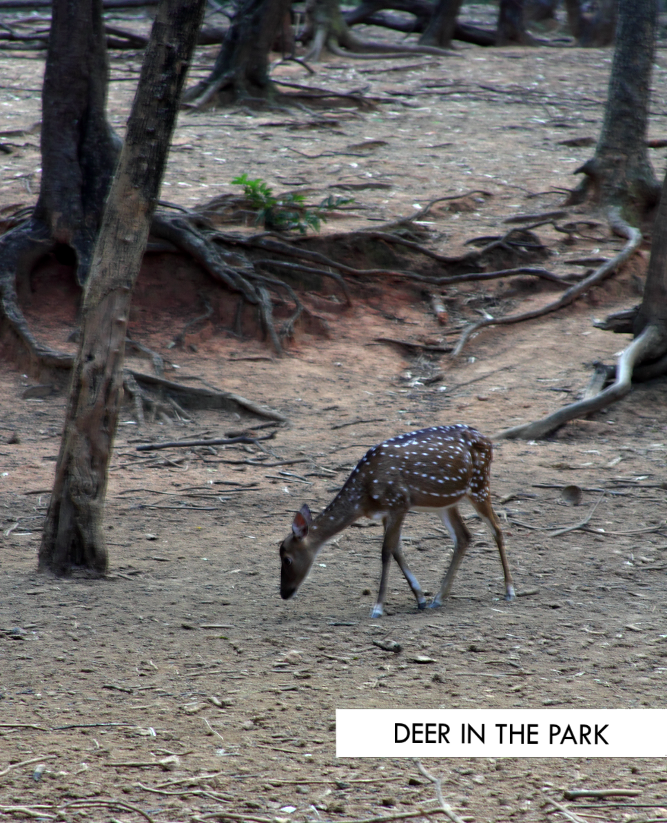 deer in the park | Photo Diaries