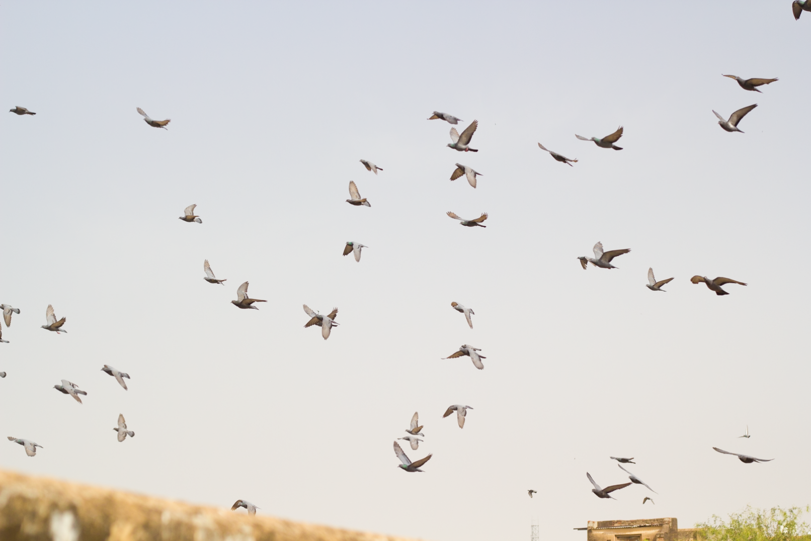 Photo Diaries | Birds In The Air