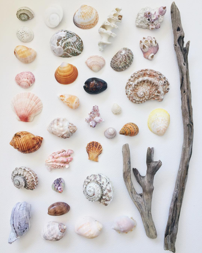 Shells from beach/ Watercolor Whale Painting/ A Creative Home..with Artist Michelle Fleur in Perth, Australia // Surelysimple.com
